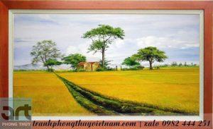 tranh vẽ cánh đồng quê