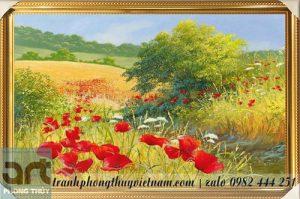 cánh đồng hoa poppy