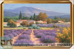 phong cảnh cánh đồng hoa