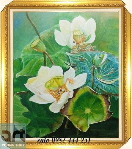 tranh hoa sen trắng