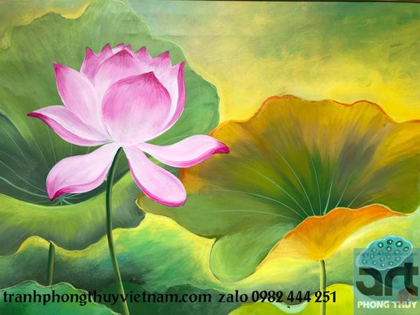 cánh hoa sen mềm mại