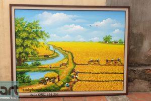 tranh phong cảnh đồng quê mùa lúa chín vàng